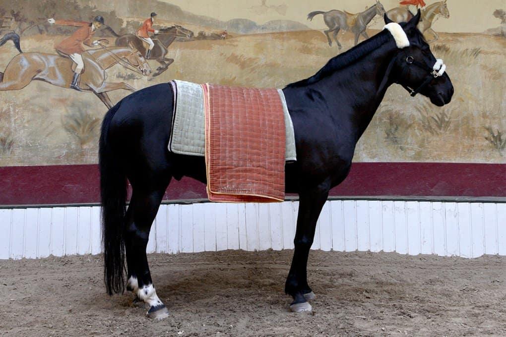 Horse Linned - fabriccopenhagen.dk